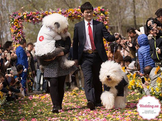 Массовая собачья свадьба