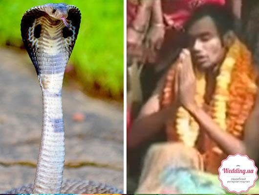 Индиец собирался жениться на змее