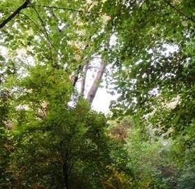 18121_800x600_pidzamkovijpark1