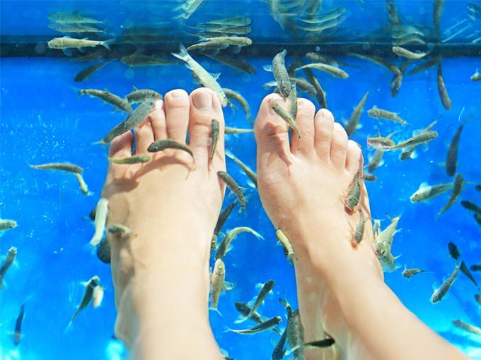 Рыбки, которые делают педикюр