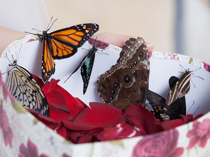 Бабочки на свадьбу