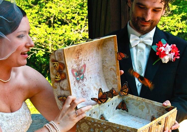 Экзотические бабочки на свадьбу