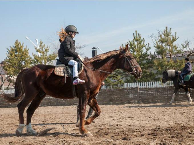Школа верховой езды Royal Horse
