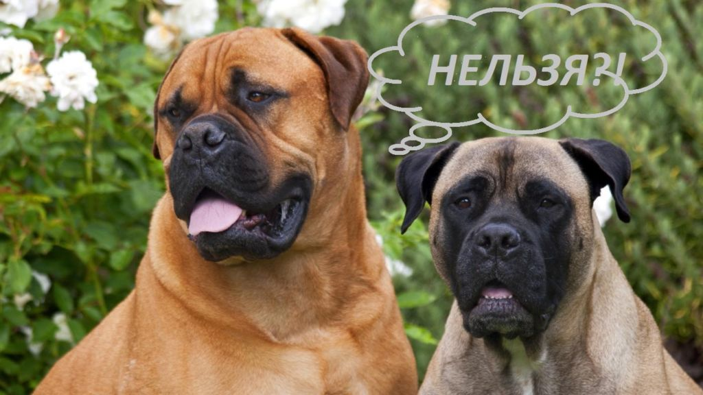 В Италии собак пришлось исключить из списка гостей свадьбы