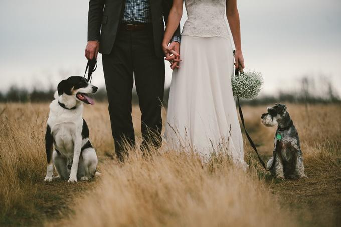 стоит ли брать животных на свадьбу