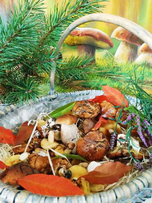 Грибной сезон в загородном комплексе Боровик